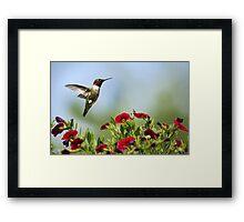 Hummingbird Frolic with Flowers Framed Print