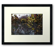 Within the Trees Framed Print