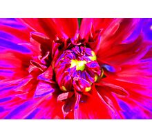Raving Beauty Photographic Print