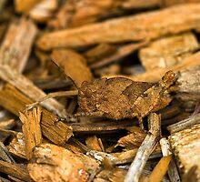 Find the Grasshopper by Adam Bykowski