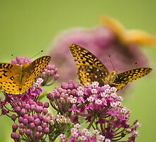 Social Butterflies by Christina Rollo