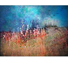 Whispers of Summer Past Photographic Print