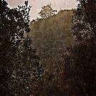 Mount Ainslee in the Fog (2) by Wolf Sverak