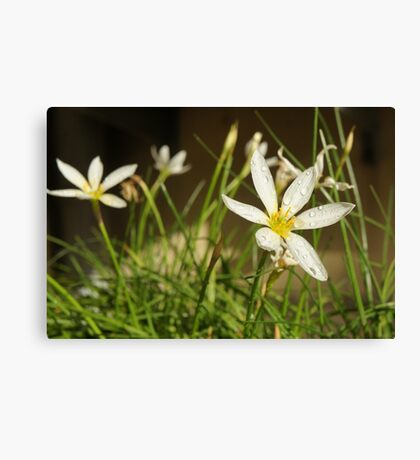 flower hour Canvas Print