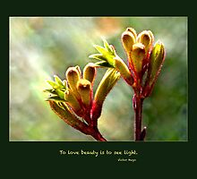 Beauty is to see light by Lisa Torma