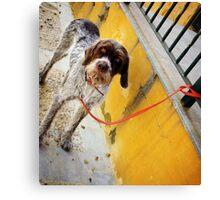 El Perro en Espana Canvas Print