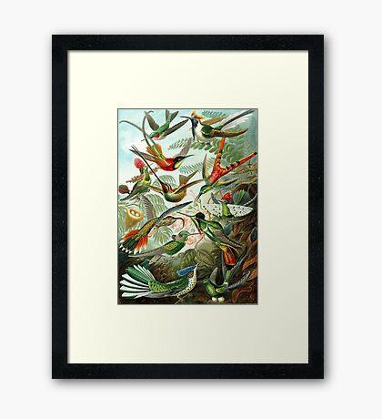 birds vintage cool design Framed Print