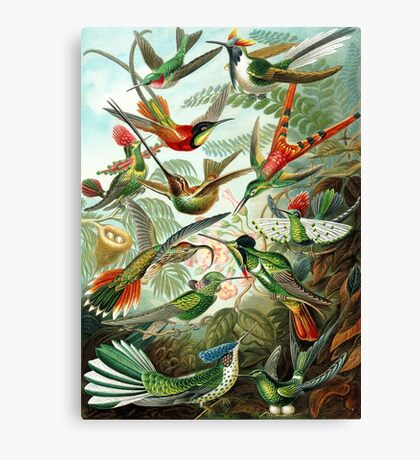 birds vintage cool design Canvas Print