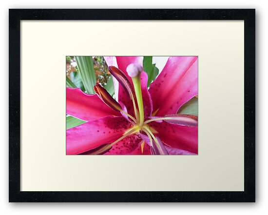 Pink Lily in Macro - Spring, Oct. 2010,  by EdsMum