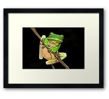 White-Lipped Green tree frog Framed Print