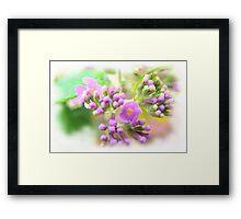 Wildflower Framed Print