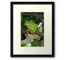Giant Green tree frog Framed Print