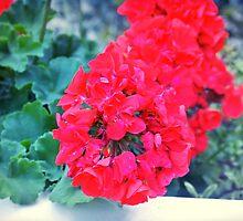 full bloom by Jessesgurl81