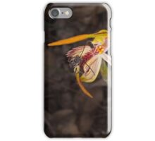 insect on clubbed spider orchid iPhone Case/Skin