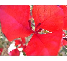 All red Photographic Print