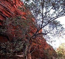 Weano Gorge rockface and tree (Pilbara) by gaylene