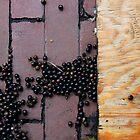 Woodberries by Peter Baglia