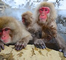 Snow Monkeys of Japan by Dean Jewell