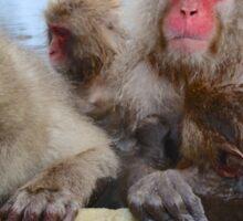 Snow Monkeys of Japan Sticker