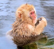 Young snow monkey by Dean Jewell