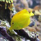 Yellow Fish by BlaizerB