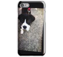 Cute puppy for all your accessories iPhone Case/Skin