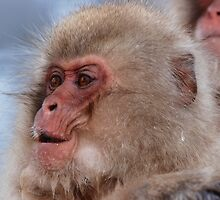 Japan snow monkey by Dean Jewell