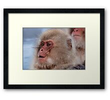 Japan snow monkey Framed Print