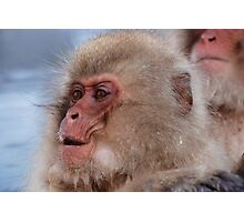 Japan snow monkey Photographic Print