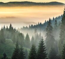 fog on hot sunrise in forest Sticker