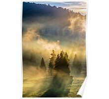 fog in the conifer forest Poster