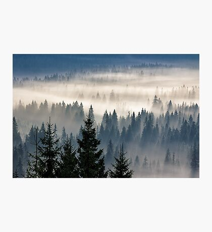 coniferous forest in foggy mountains Photographic Print