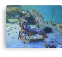 Lovely Lobster Canvas Print