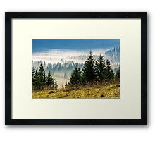 coniferous forest in foggy Romanian mountains Framed Print