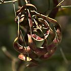 Natures Ornament by Joy Watson