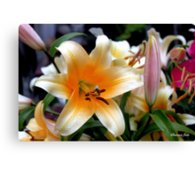 Tequila Sunrise Lily with Raindrops Canvas Print