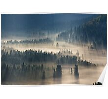 coniferous forest in foggy mountains Poster