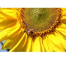 Sunflower Visitor Photographic Print
