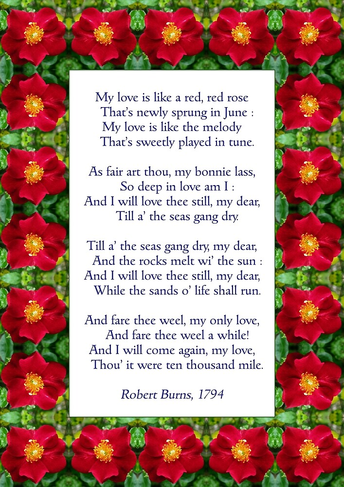 """""""My love is like a red, red rose"""" - Burns (anglicised) by Philip Mitchell"""