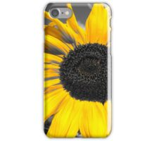 yellow sunflower on a gray background iPhone Case/Skin