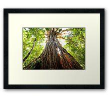 Cathedral Fig tree Queensland Framed Print