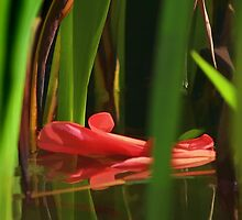 Through The Reeds by Donuts