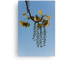 Springtime Jewelry Canvas Print