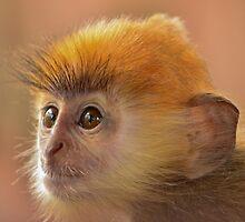 Silver leaf monkey by emmelined