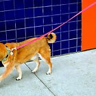 Love, Love, Love My Pink Leash by Michael May