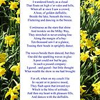 """Wordsworth's """"Daffodils"""", especially good as a card. by Philip Mitchell"""