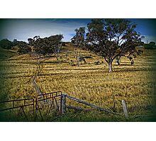 Boundary Fence Photographic Print