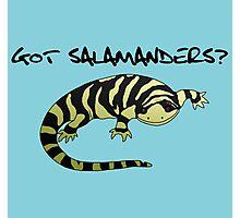 Got Salamanders? Photographic Print