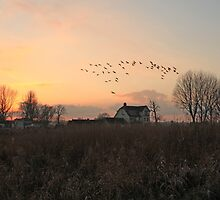 Coming Home by Ursula Rodgers Photography