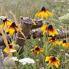 Rudbeckia and Wildflower Meadow by Astrid Ewing Photography